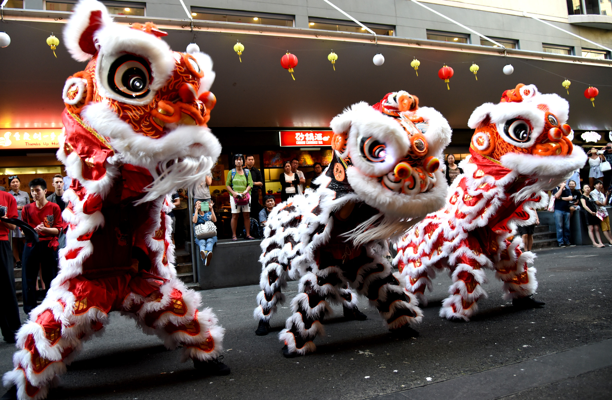 lion dancing National geographic interviews a group of traditional lion dancers at sydney's chinese gardens for 2018 chinese new year, year of the dog.