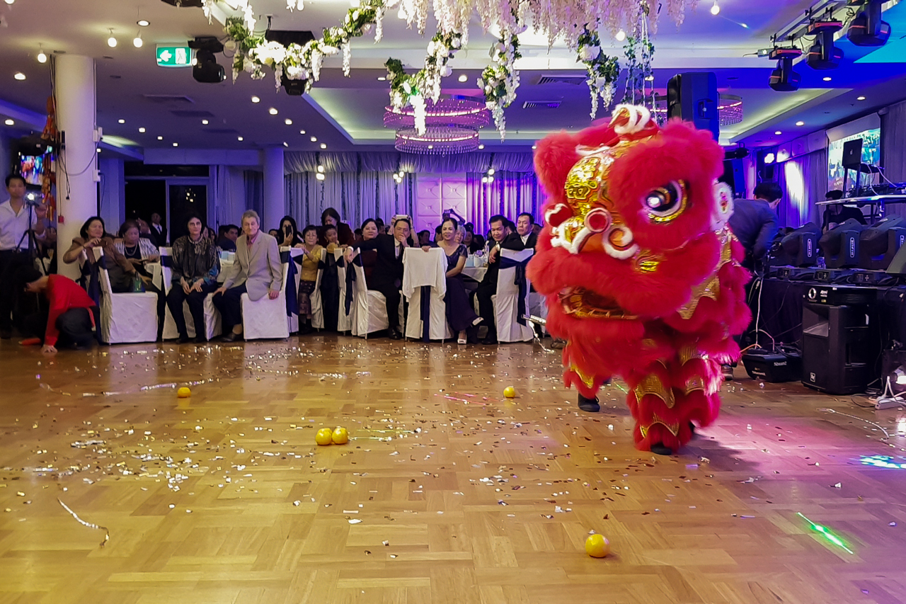 Wedding lion running